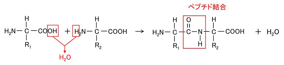 反応 ビウレット 生化学項目の反応タイムコースと測定値